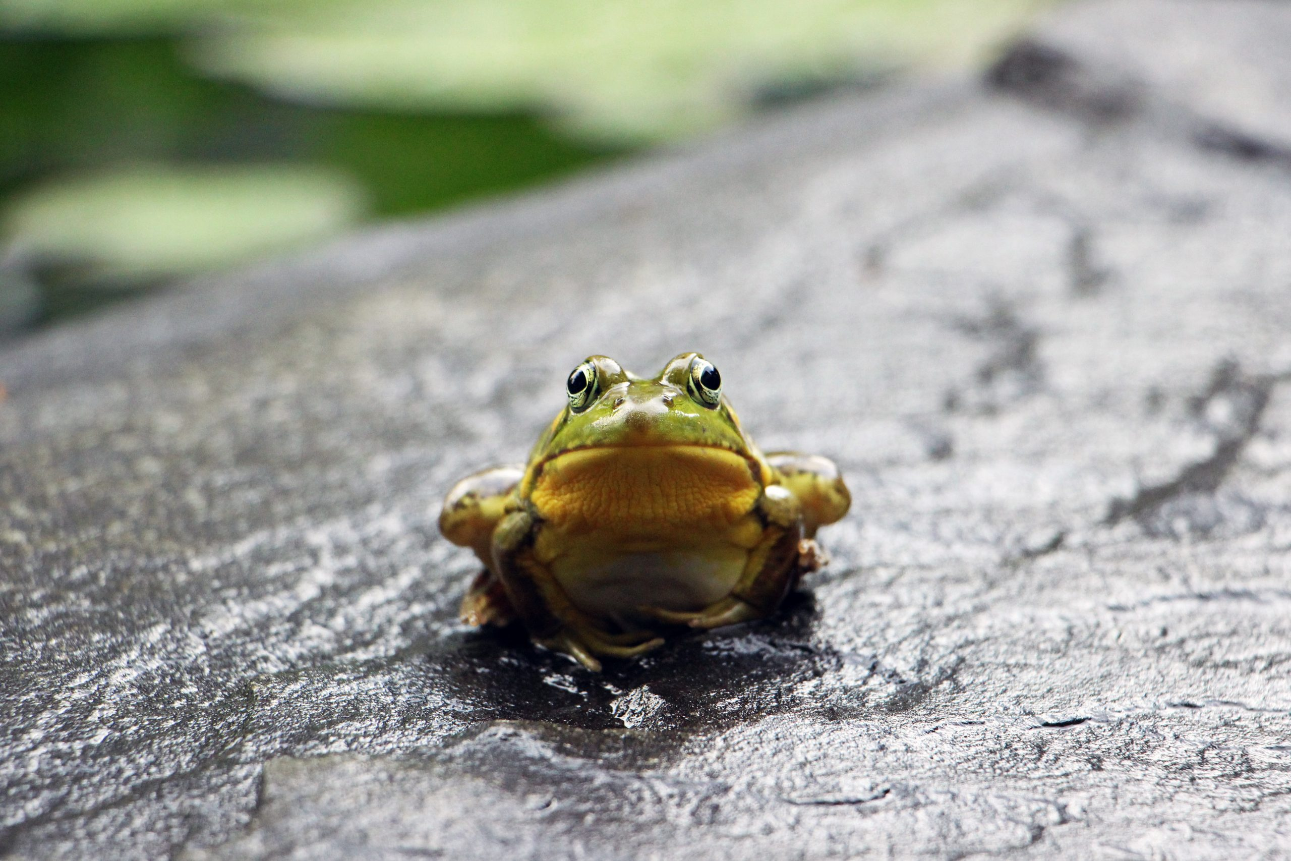 Tick of the Ugly Frog on your insurance to-do list